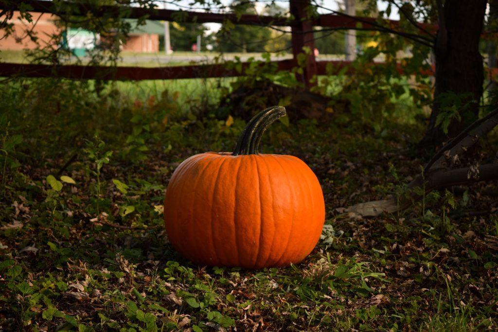 Fall Activity Pumpkin Picking