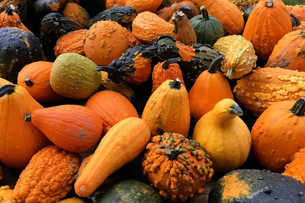 Fall activity squash recipes